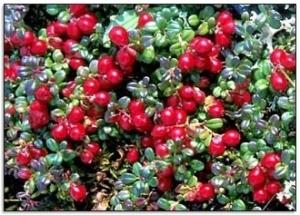 ENC - Cranberry Stevens 3-2-14