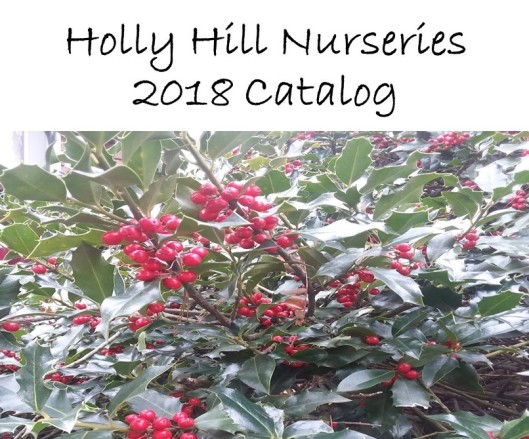Holly Hill Nurseries COVER JPG 12-27-2017